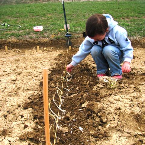 natalie planting 2