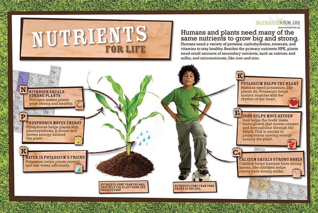 NPK Soccer Poster – Nutrients for Life